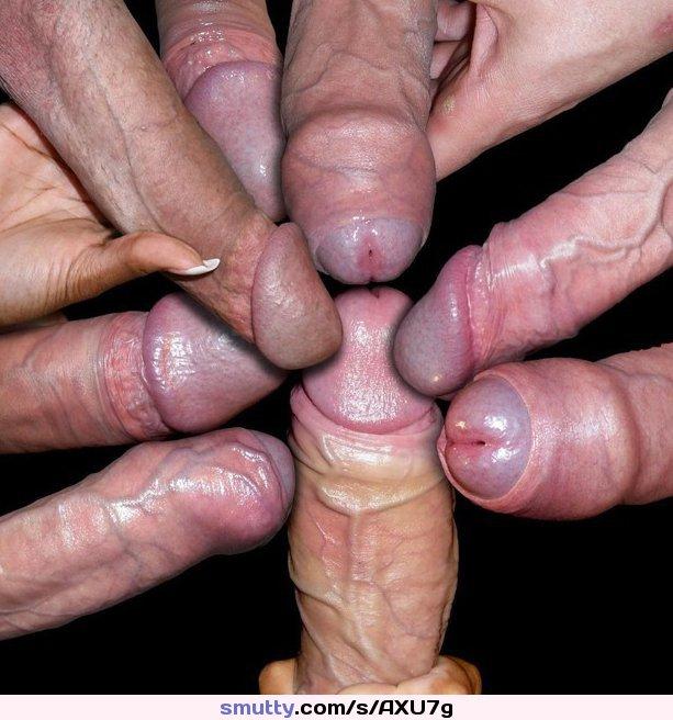 Фото все виды членов